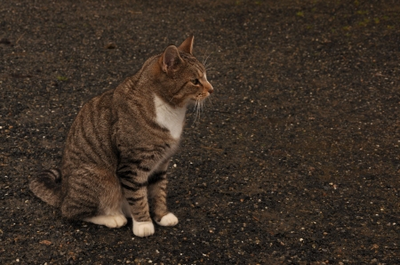 cats_tabby_cat_desktop_4288x2848_hd-wallpaper-673222