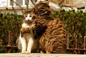 psychologymatters-asia-cat_hug