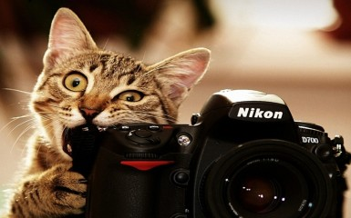 funny-cat-facebook-cover4
