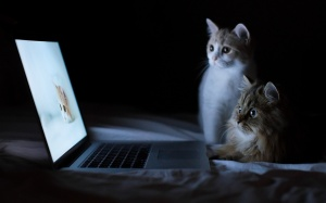 Funny-Cat-Wallpaper-For-Desktop