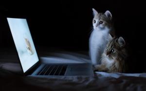 Funny-Cat-Wallpaper-For-Desktop