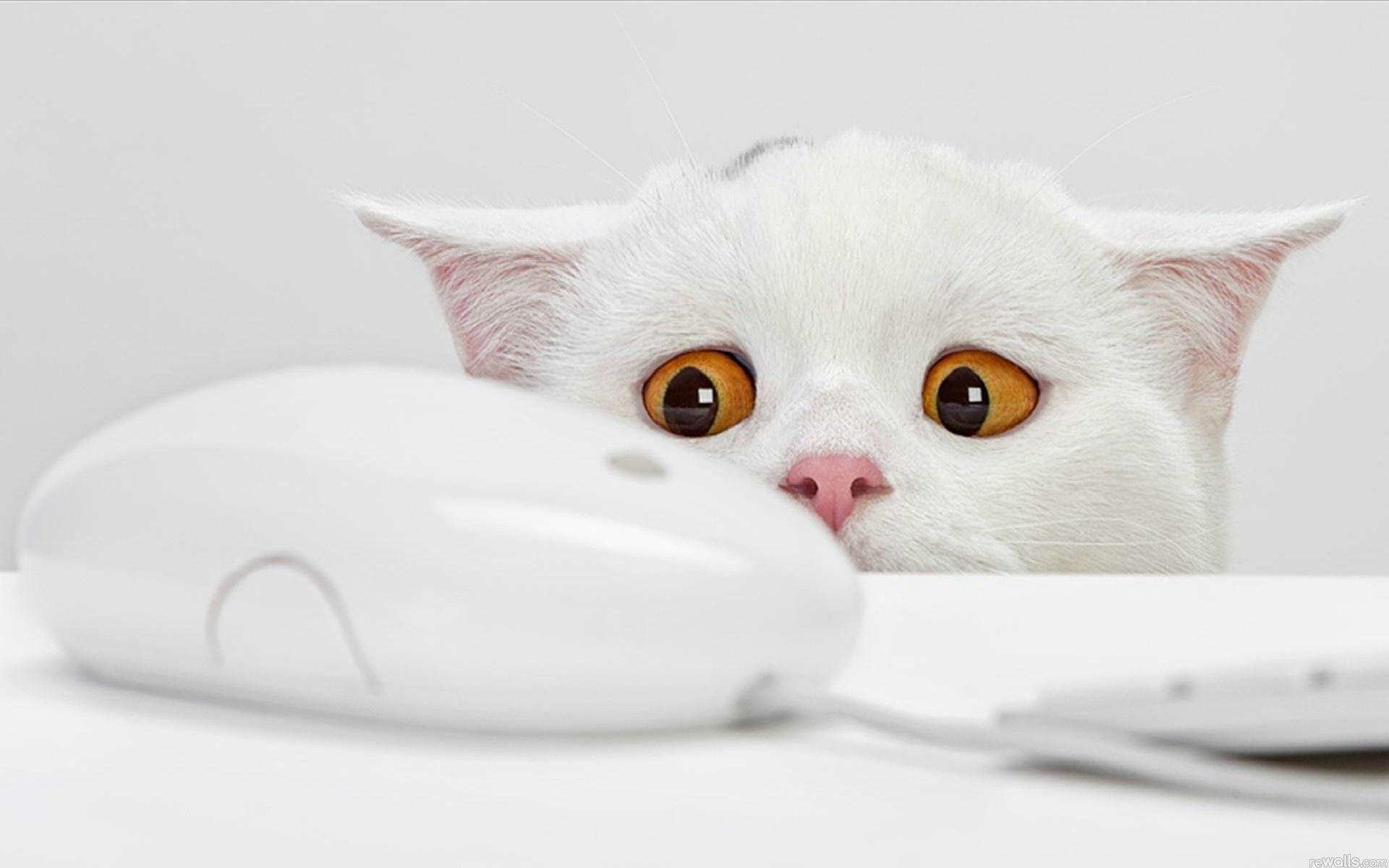 Кот взгляд испуганный  № 650694 загрузить