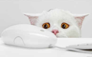 Funny-White-Cat-Face
