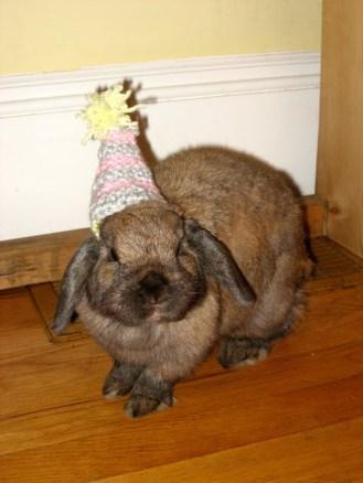 wpid-birthday-bunny-1.jpg