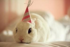 wpid-birthday-buns18.jpg