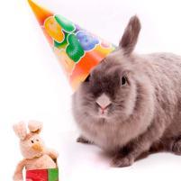 wpid-birthday_bunny.jpg