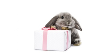 wpid-bunny-and-present-wallpapers_33047_1366x768.jpg