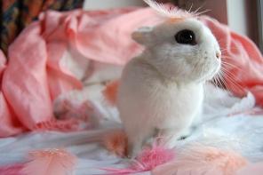 wpid-bunny-pink-feathers.jpg.jpeg